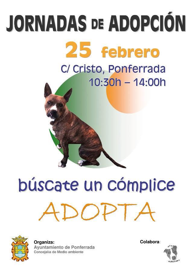 Jornada de adopción de mascotas en Ponferrada 1