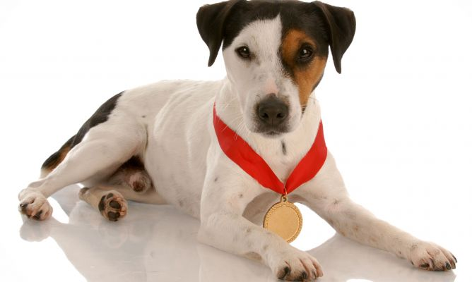 VII Concurso Nacional canino del Bierzo 1