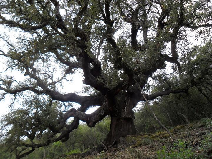 La Casa del parque de Las Médulas organiza una ruta por el entorno del Páramo y los Zufreiros del Frade 1