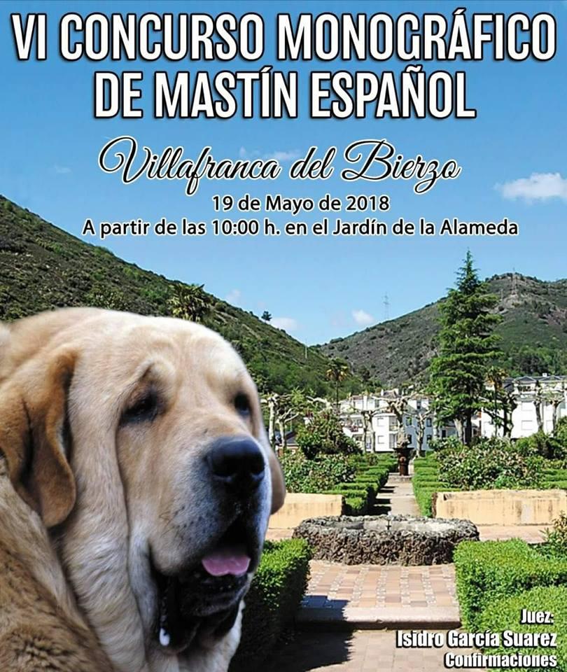 El sábado se celebra el VI Concurso Monográfico del Mastín Español en Villafranca del Bierzo 1