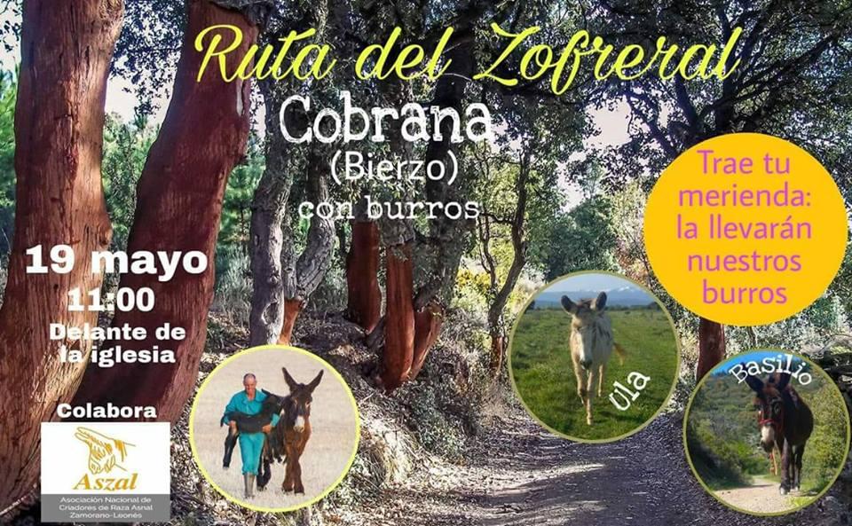 Ruta en familia por el Zofreral de Cobrana acompañados de burros 1