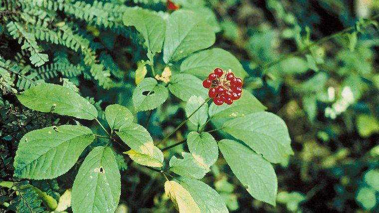 Taller 'Los secretos de las plantas aromáticas y medicinales del jardín del museo 1