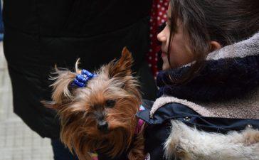 Mascotas y alumnos de San Ignacio celebraron la festividad de San Antón 6
