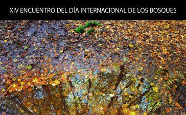 XIV Encuentro del Día Internacional de los Bosques 2019 6