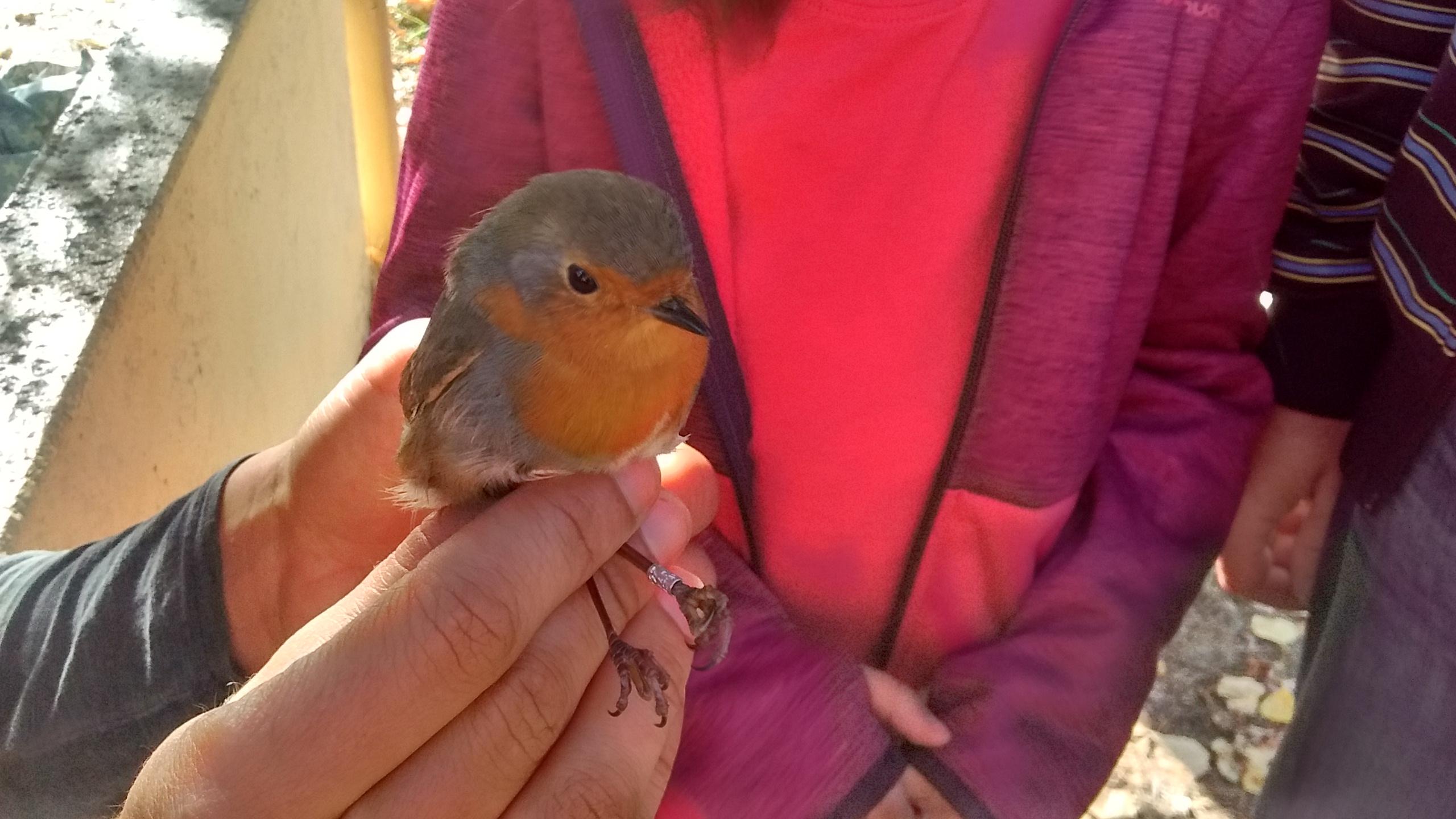 Voluntariado de anillamiento de aves en la Casa del Parque de las Médulas 1