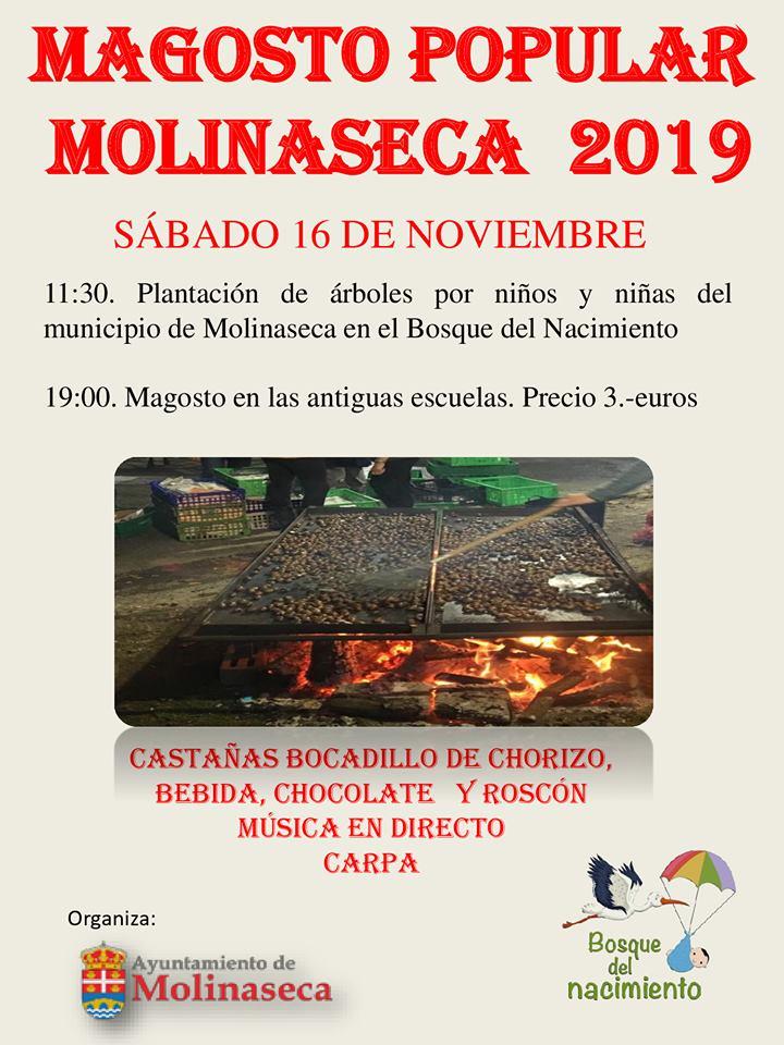 Gran Magosto en Molinaseca. 14 de noviembre 2019 1
