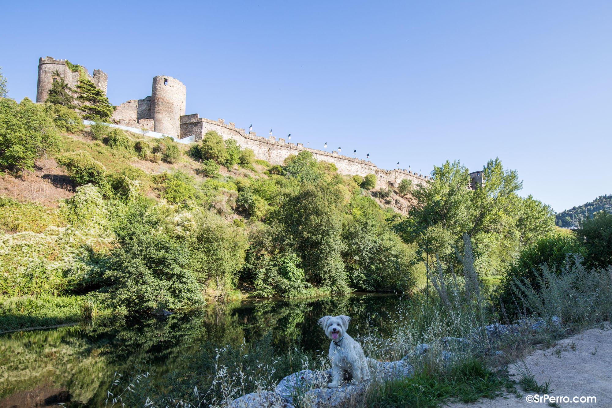Ponferrada encabeza el ranking de ciudades Dog-Friendly de España 1