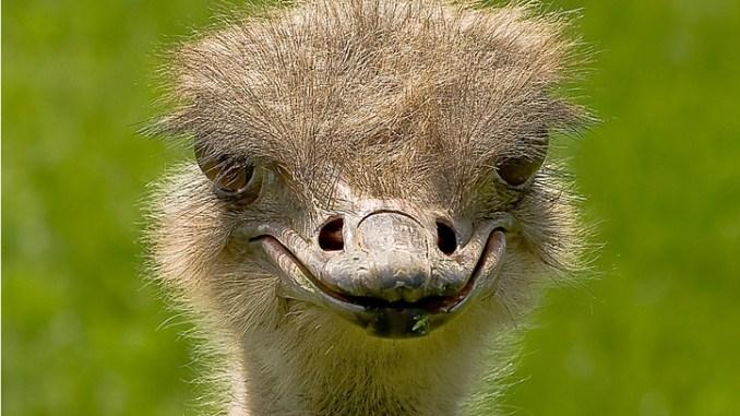 ¿Quieres que un avestruz te felicite el cumpleaños? La divertida iniciativa de 'La Granja de Ye' para los niños 1