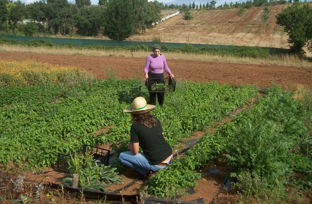 673.000 euros en ayudas para impulsar el cooperativismo, el emprendimiento y apoyar el autoempleo femenino en el régimen agrario 1