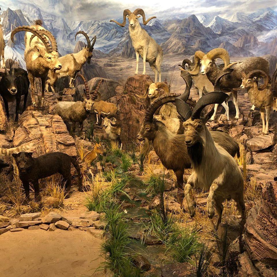 Visita al Museo de la Fauna Salvaje de Vadehuesa 3
