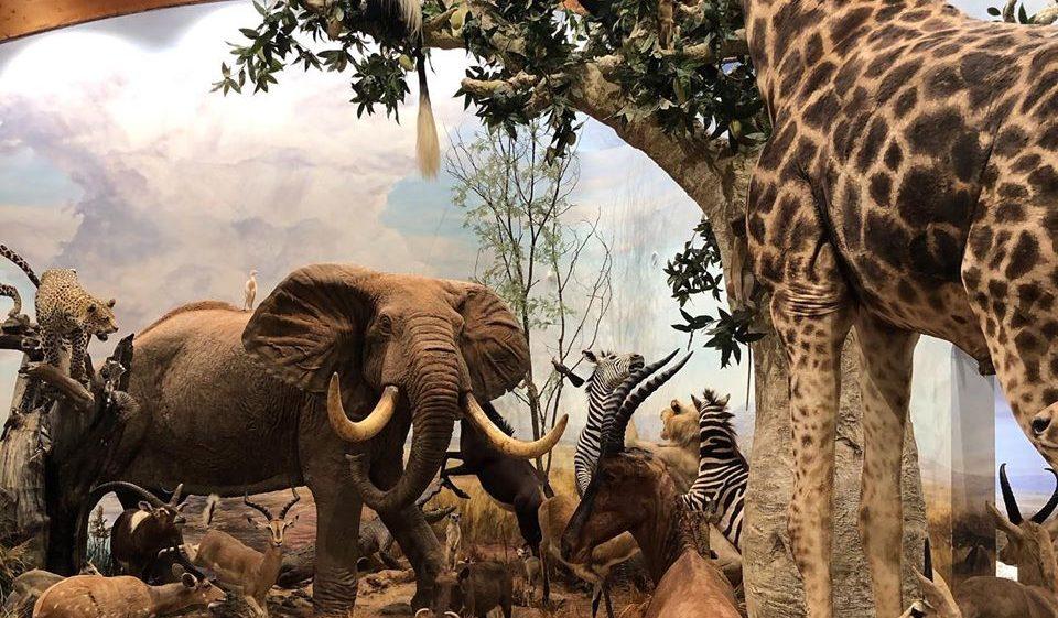 Visita al Museo de la Fauna Salvaje de Vadehuesa 1