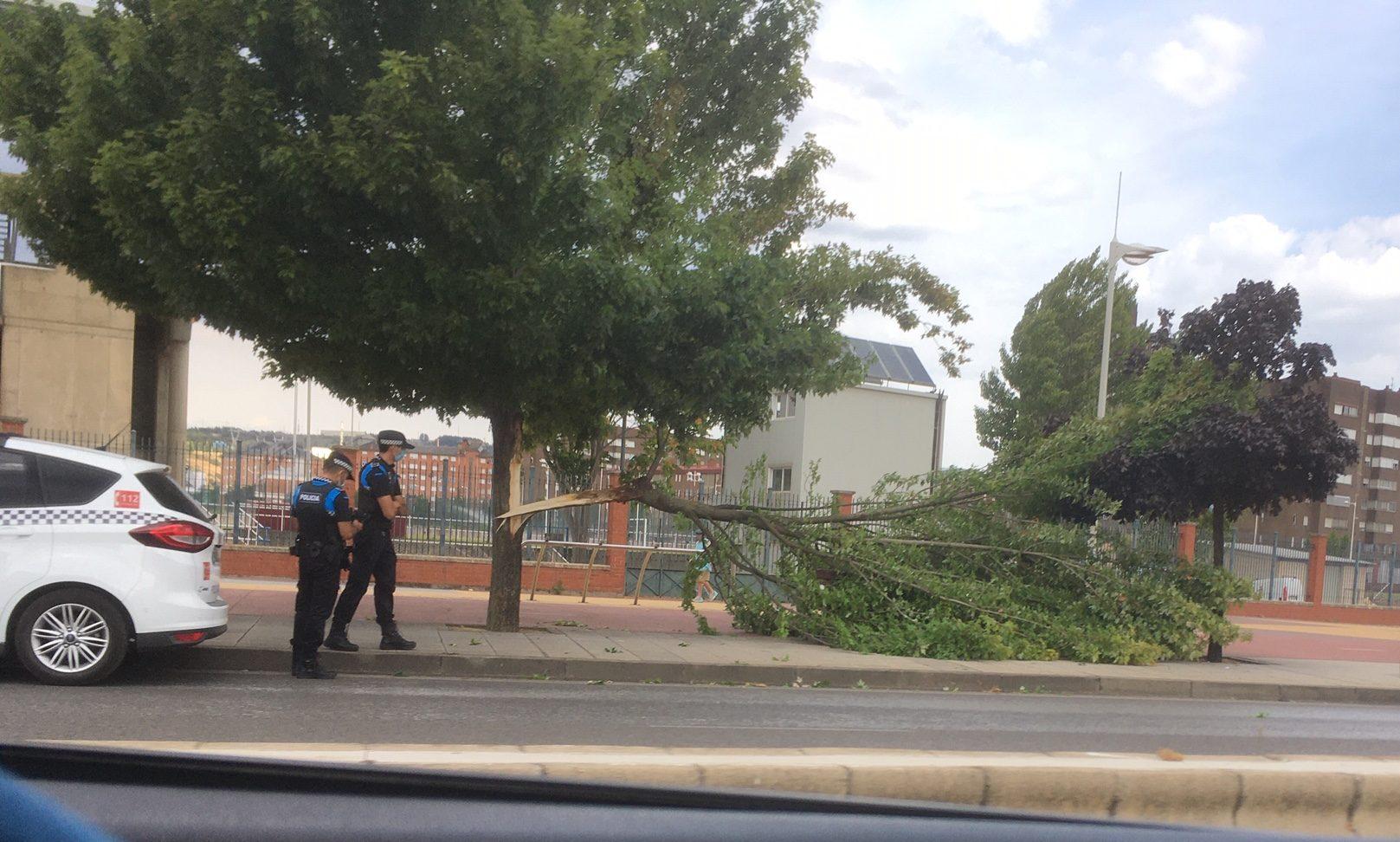 Un rama de gran tamaño cae sobre la acera de la avenida de Asturias y nuevo corte en la Carretera de Peñalba 1