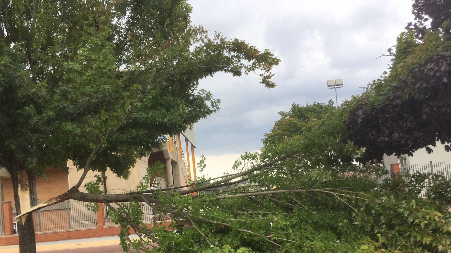 Un rama de gran tamaño cae sobre la acera de la avenida de Asturias y nuevo corte en la Carretera de Peñalba 2