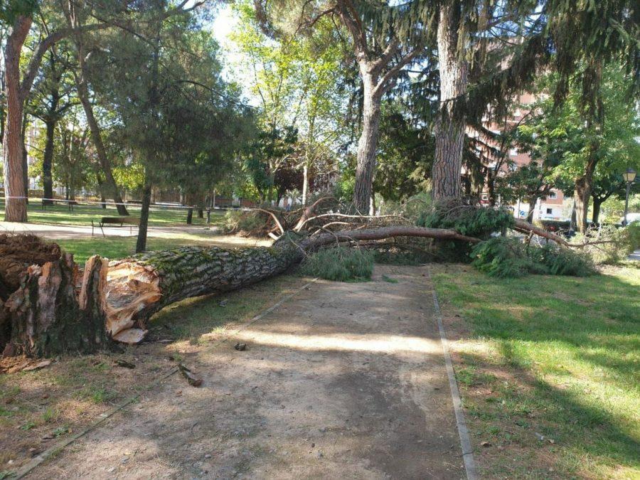 Ponferrada decreta el cierre del parque del Plantío ante el riesgo de caída de árboles dañados 1