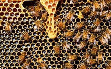 """Jornada demostración """"Productos ecológicos contra las enfermedades de las abejas"""" 2"""