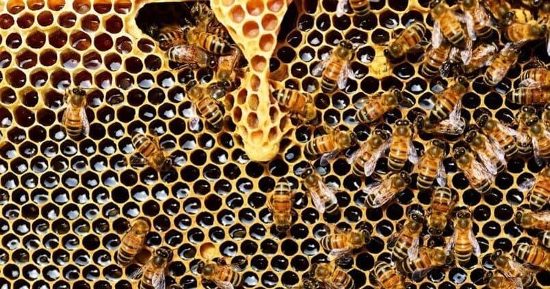 """Jornada demostración """"Productos ecológicos contra las enfermedades de las abejas"""" 1"""