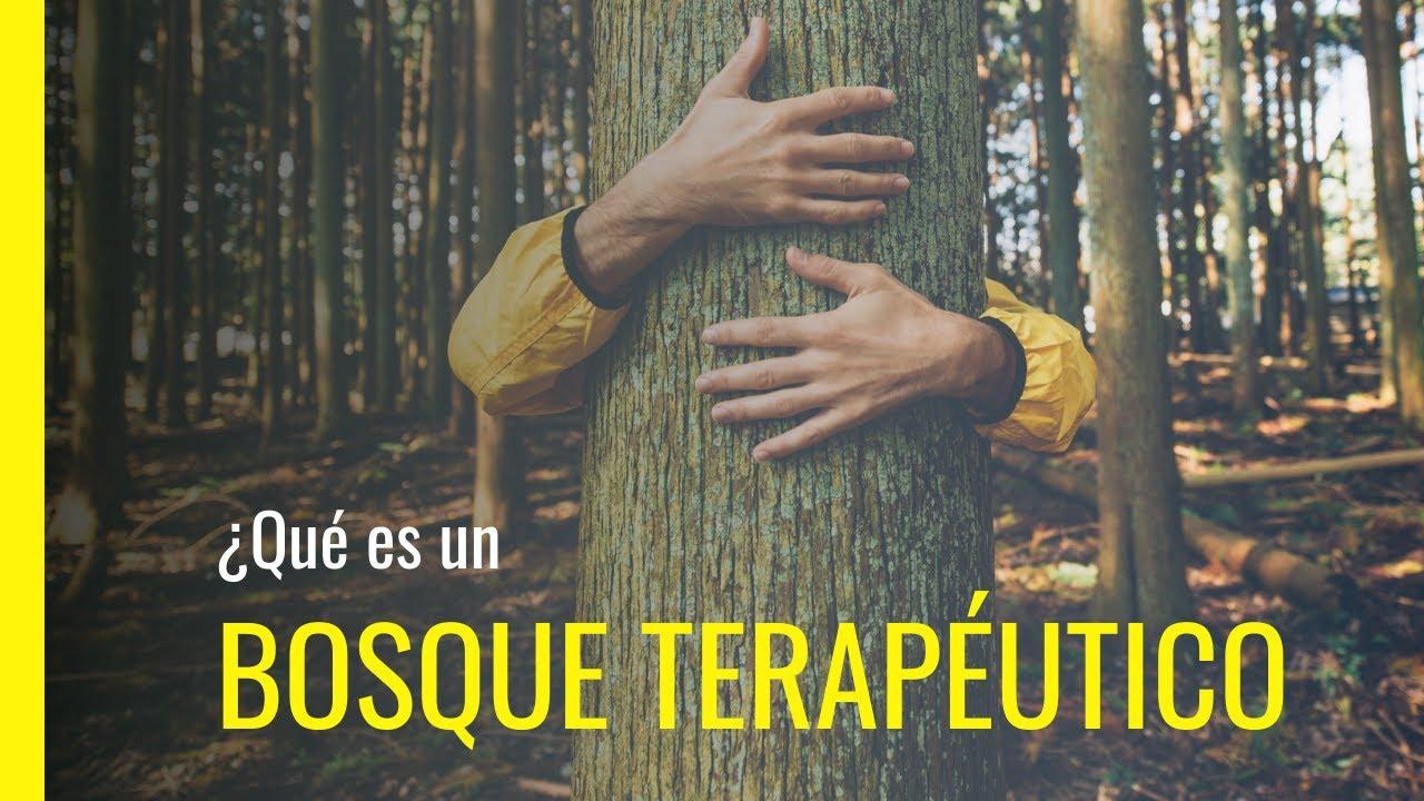 El soto de castaños de Villar de los Barrios aspira a convertirse en un bosque terapeútico 1
