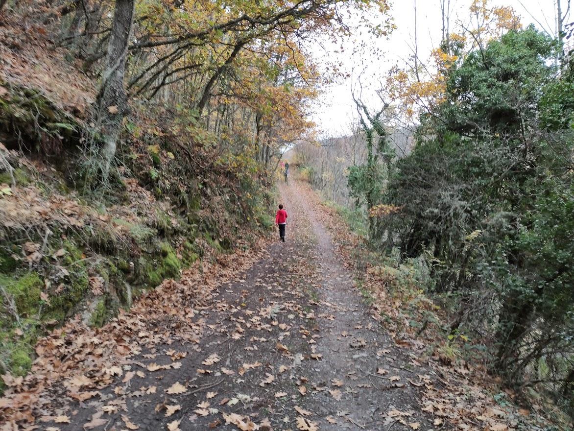 Rutas por el Bierzo: El Castañar de Manzanedo de Valdueza 7