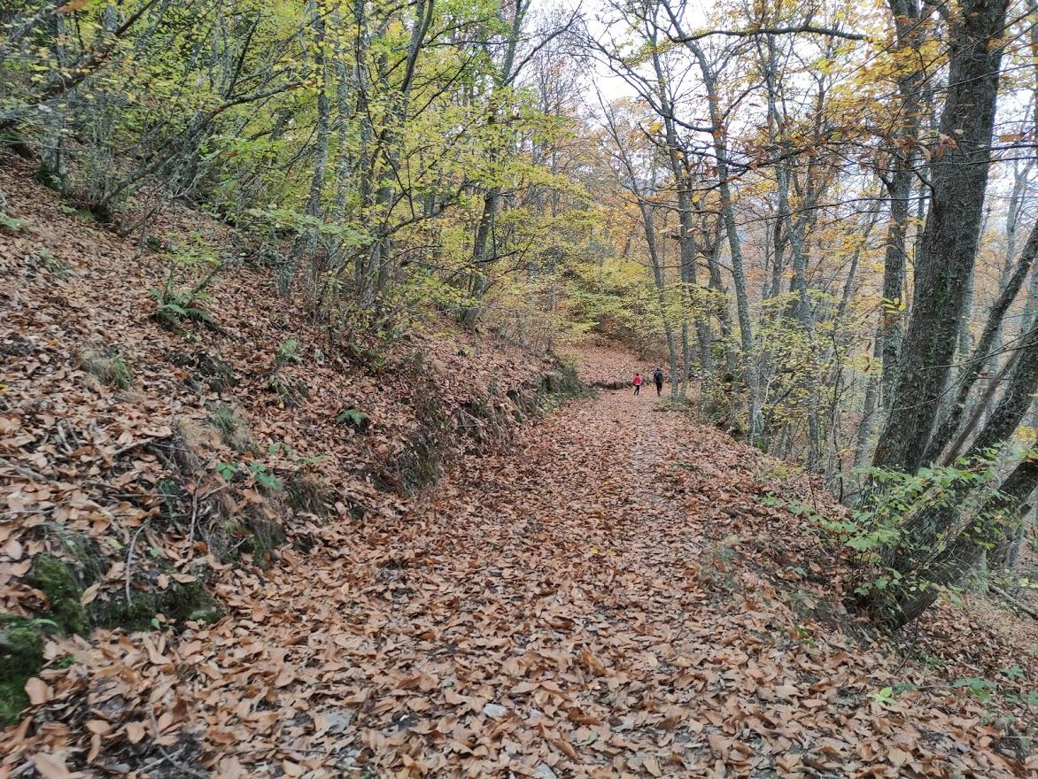 Rutas por el Bierzo: El Castañar de Manzanedo de Valdueza 15