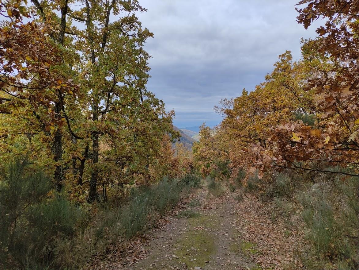 Rutas por el Bierzo: El Castañar de Manzanedo de Valdueza 8