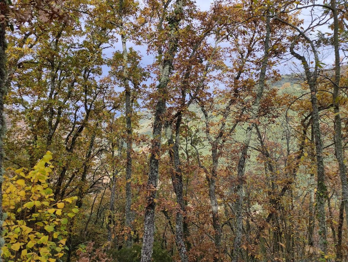 Rutas por el Bierzo: El Castañar de Manzanedo de Valdueza 14