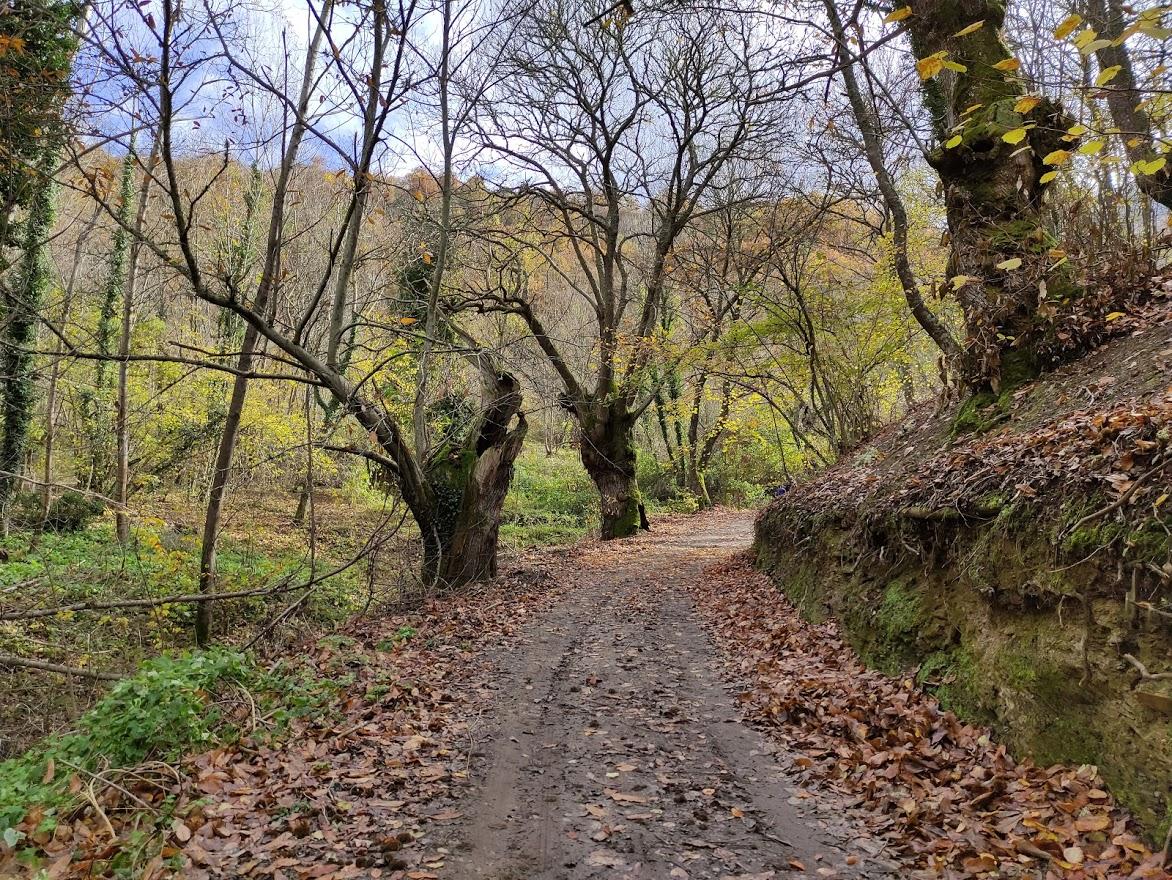 Rutas por el Bierzo: El Castañar de Manzanedo de Valdueza 11