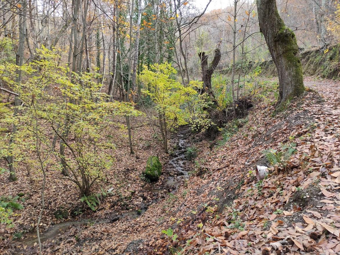 Rutas por el Bierzo: El Castañar de Manzanedo de Valdueza 18