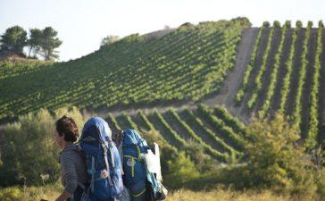 La Junta destina 230.000 euros a las Rutas del Vino de España certificadas de Castilla y León para impulsar el turismo cultural y rural en la Comunidad 5
