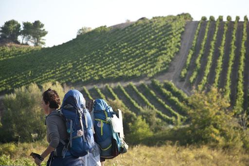La Junta destina 230.000 euros a las Rutas del Vino de España certificadas de Castilla y León para impulsar el turismo cultural y rural en la Comunidad 1