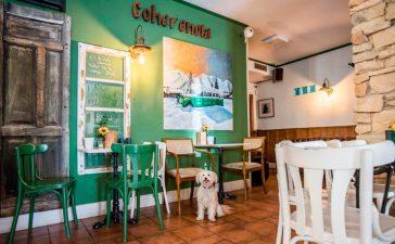¿Es el Bierzo Pet Friendly? La revista Traveler  pasa 48 horas con perro en el Bierzo 2