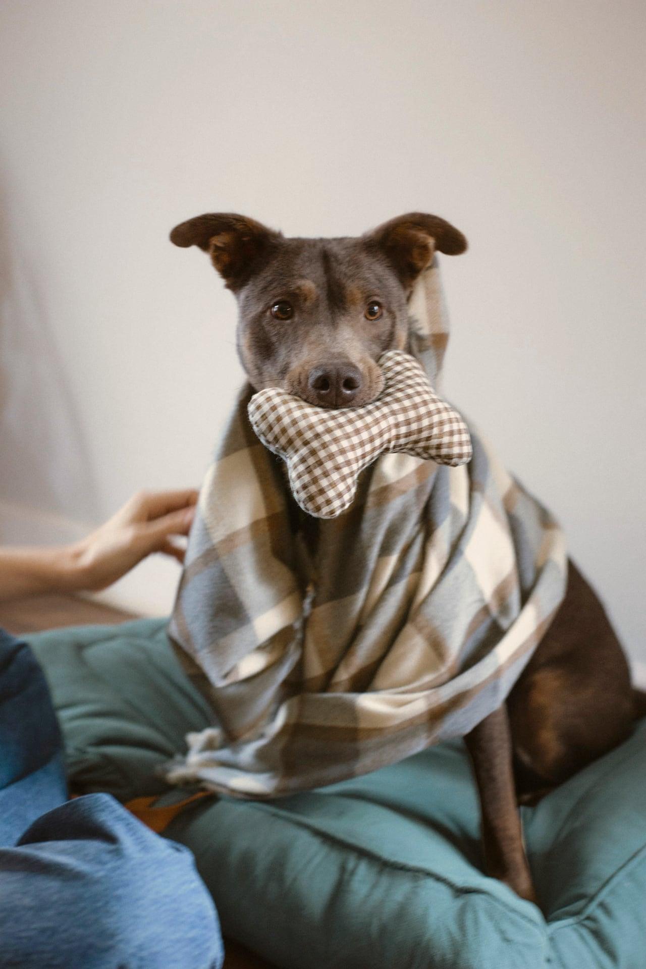 Zara lanza una colección de ropa y accesorios para perros 3