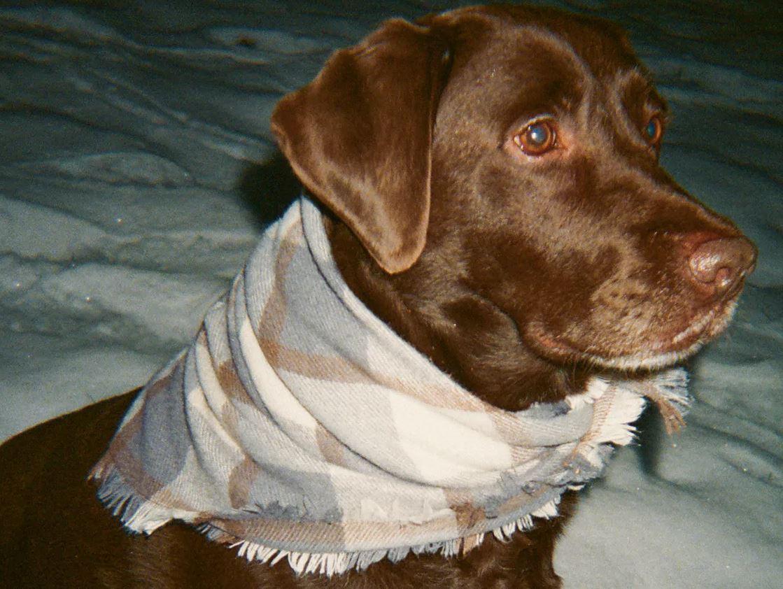Zara lanza una colección de ropa y accesorios para perros 2