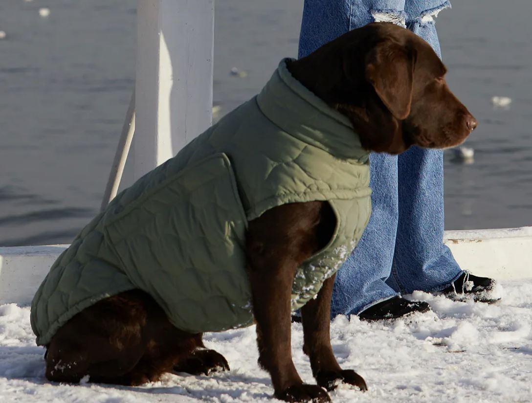 Zara lanza una colección de ropa y accesorios para perros 1