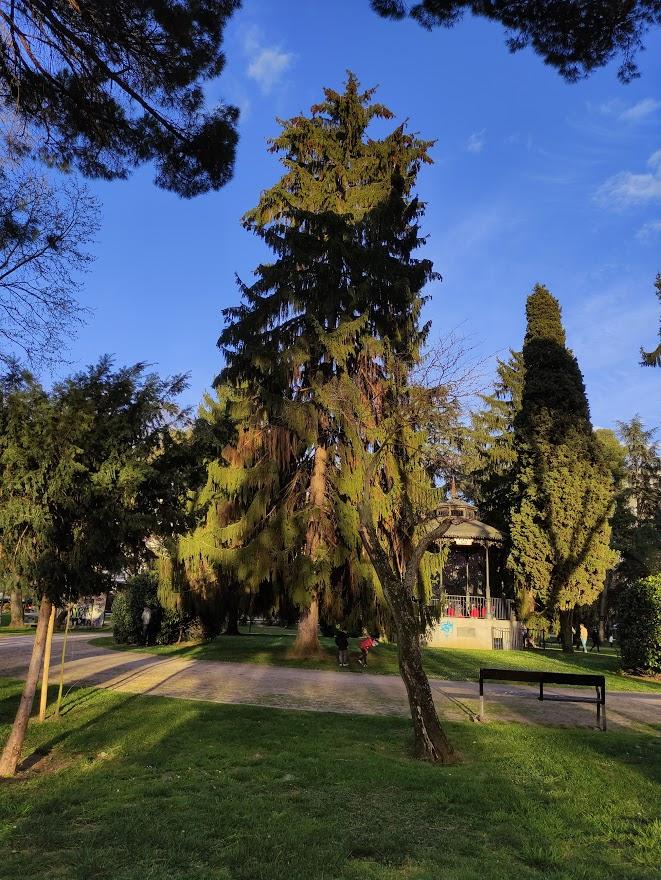A la sombra de los árboles monumentales y singulares de Ponferrada 11