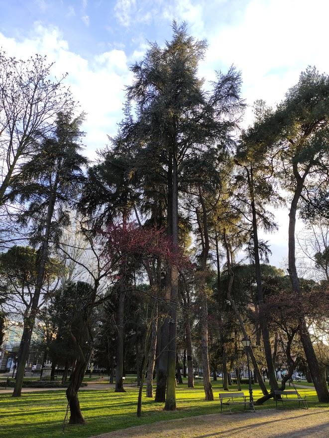 A la sombra de los árboles monumentales y singulares de Ponferrada 12