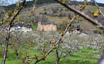 Rutas para disfrutar de la floración de los cerezos en el Bierzo 4