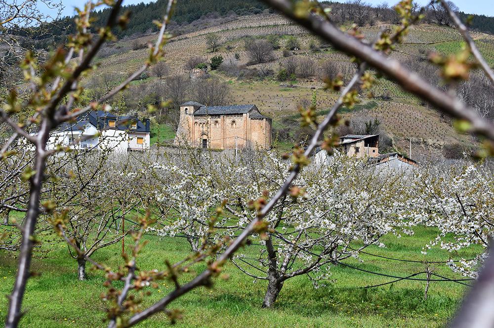 Rutas para disfrutar de la floración de los cerezos en el Bierzo 1