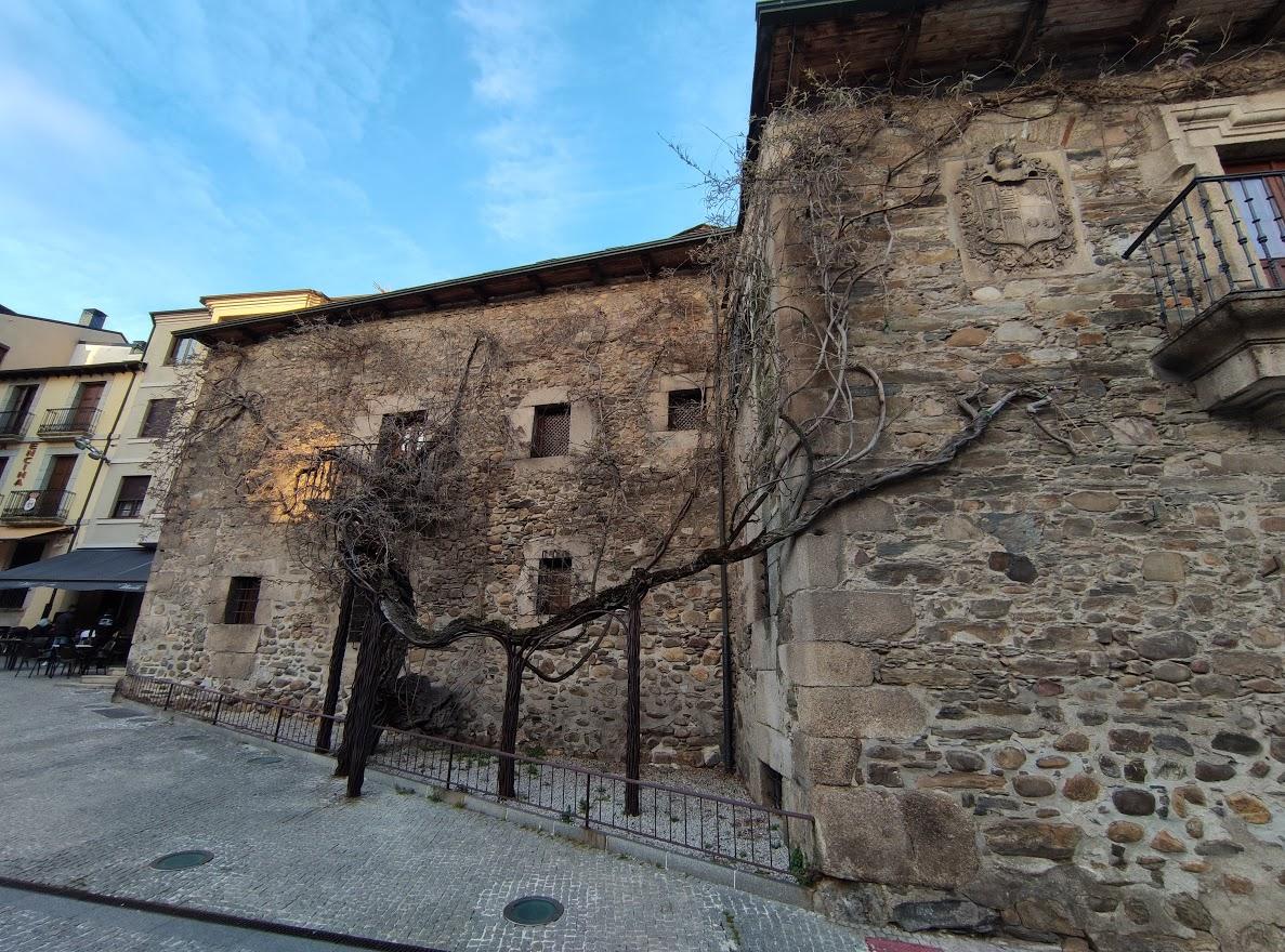 A la sombra de los árboles monumentales y singulares de Ponferrada 6