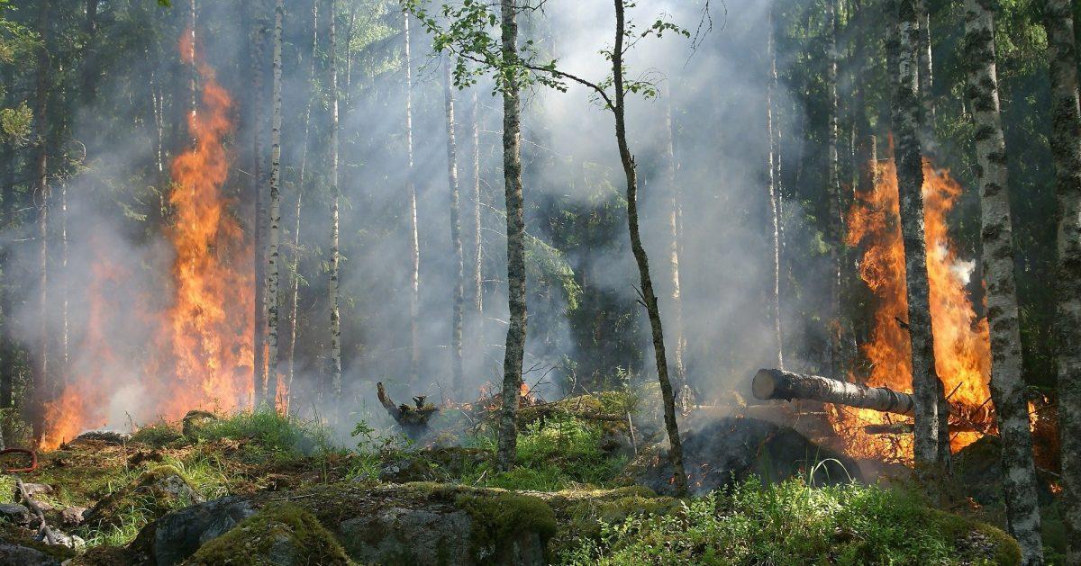 El campus de Ponferrada acoge el lunes una jornada técnica sobre el seguimiento de cambios y daños en los bosques empleando sensores remotos. 1