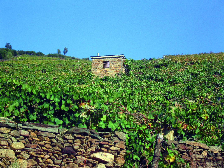 Con niños | Conocer Galicia en tren turístico 5