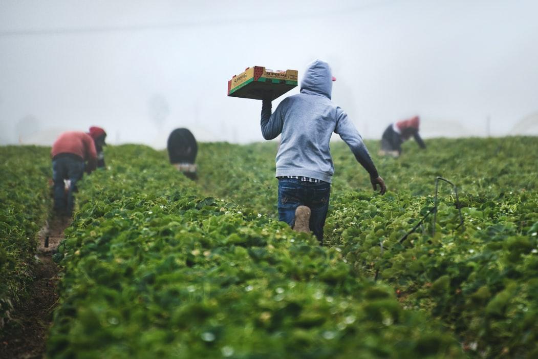 El arraigo laboral de las personas inmigrantes, cuestión clave para la integración de este colectivo en el medio rural de la Comunidad 1