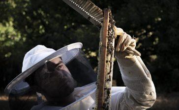La miel del Bierzo arrasa en los premios Great Taste de Londres 2