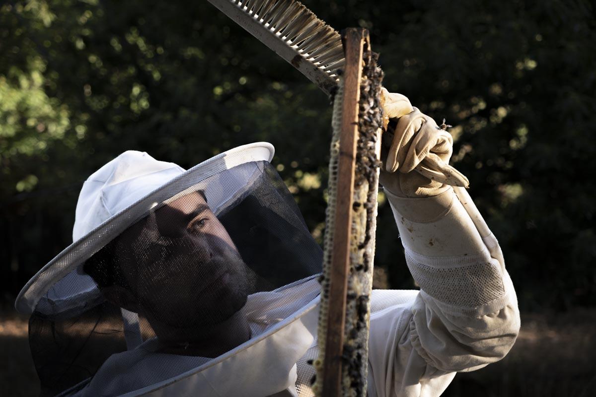 La miel del Bierzo arrasa en los premios Great Taste de Londres 1