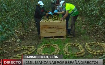 La manzana reineta del Bierzo luce en el programa 2.000 de 'España Directo' 3