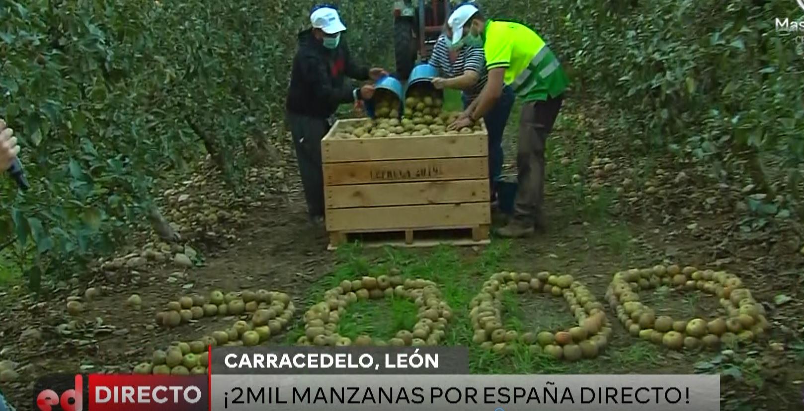 La manzana reineta del Bierzo luce en el programa 2.000 de 'España Directo' 1